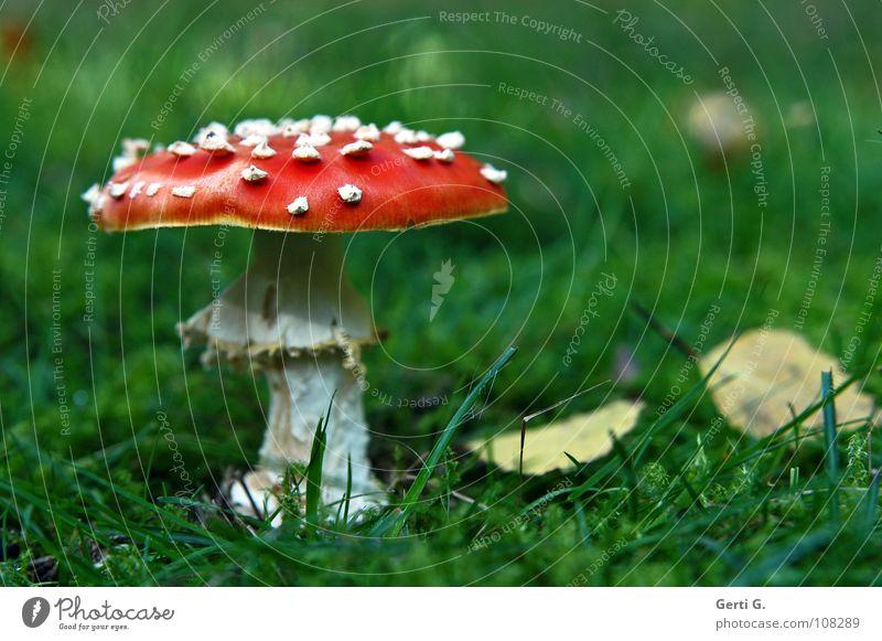 Schmuck°stück grün schön rot Blatt gelb Herbst Gras Glück Wachstum gefährlich stehen Dach Bodenbelag Symbole & Metaphern Punkt Hut