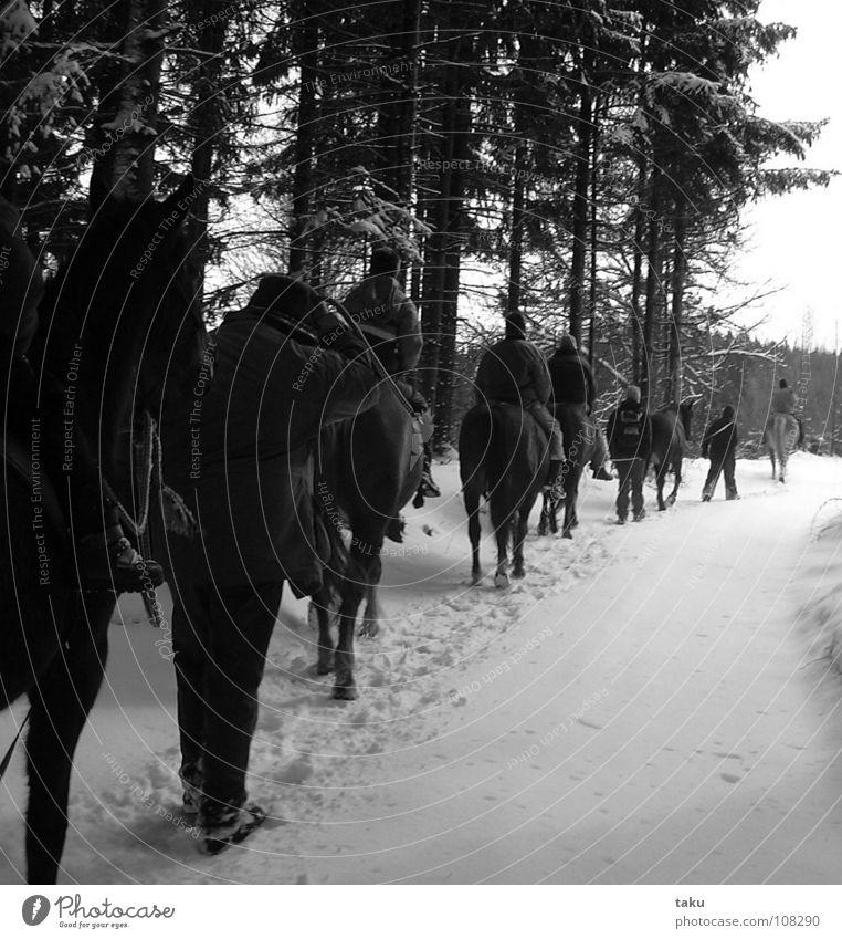WINTERKARAWANE Mensch Baum Sonne Winter ruhig Wald Landschaft kalt Schnee Arbeit & Erwerbstätigkeit glänzend mehrere Pause Pferd Spuren Fußspur