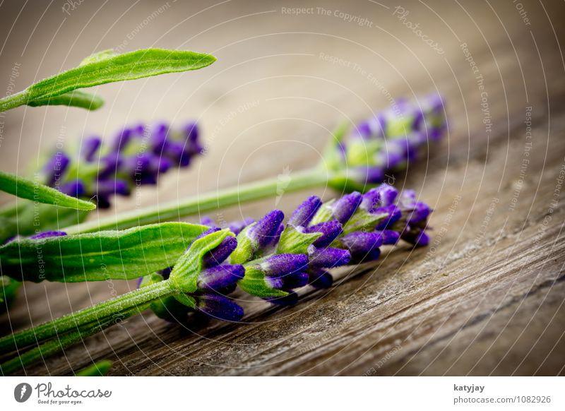 Lavendel Blume Blumenstrauß Kräuter & Gewürze Blüte violett Makroaufnahme Medikament Natur Parfum Pflanze Duft schön Sommer Nahaufnahme Blühend Erholung Massage