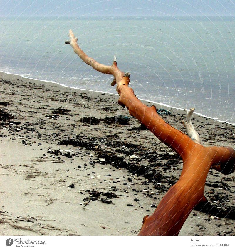 Hinterm Horizont gehts weiter Gedeckte Farben Außenaufnahme Tag Strand Meer Sand Wasser Küste Ostsee blau Strandgut türkis Ast Kiefer