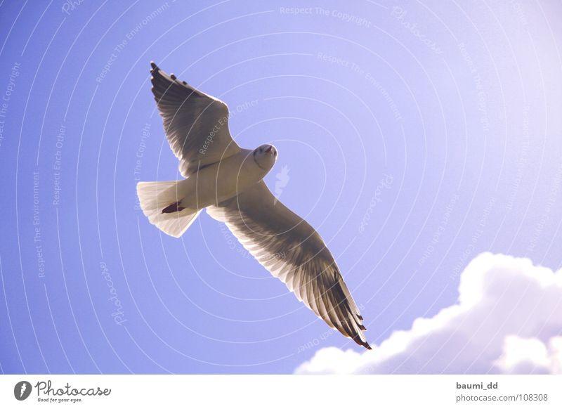 Möve Himmel Sonne Wolken Tier Vogel Luftverkehr
