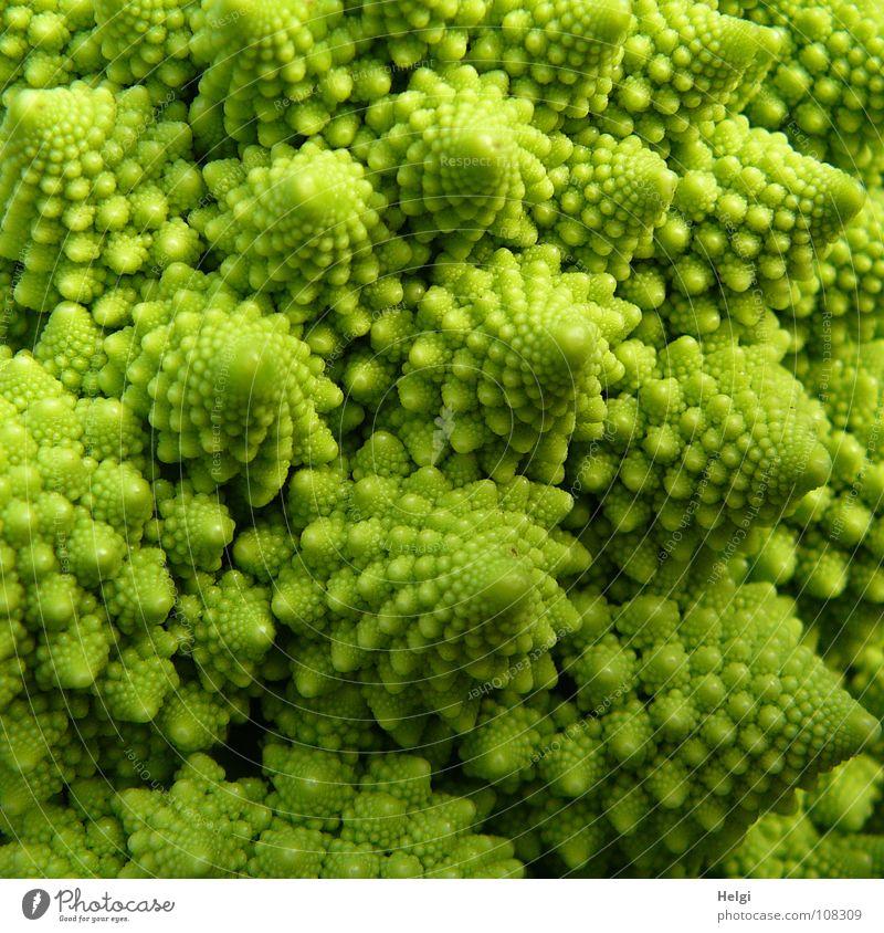 Detail eines Romanesco-Kohlkopfes Blumenkohl Brokkoli Ernährung Vegetarische Ernährung Vegane Ernährung Pflanze Gesundheit Vitamin Lebensmittel kochen & garen