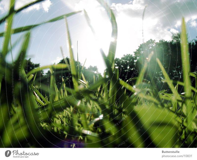 ...im Gras gelegen Natur Sonne Erholung Gras Rasen
