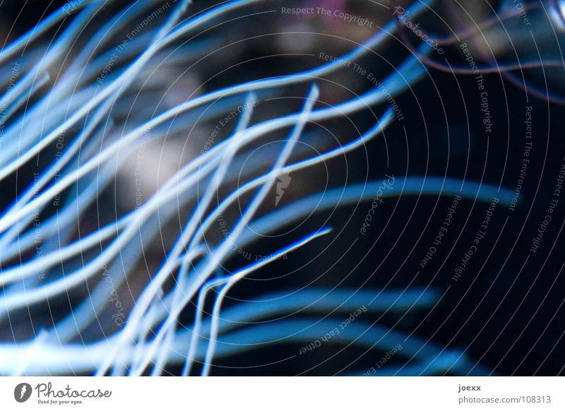 Lichtwellen Wasser Meer blau Pflanze Haare & Frisuren See Wellen tauchen Tentakel Tiefsee Wasserpflanze