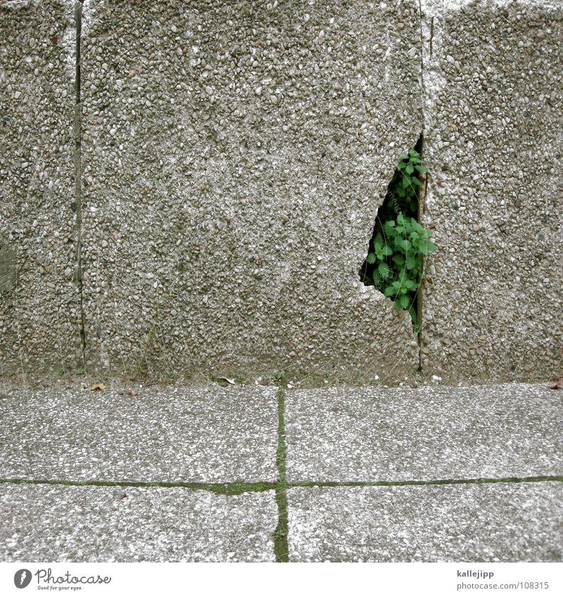 berliner pflanze grün Pflanze Sommer Erholung oben grau Garten Stein Luft Park Erde Beton Ecke Bodenbelag Spaziergang unten