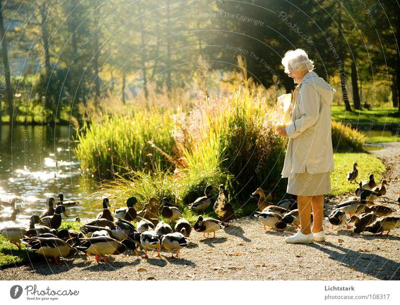 wulli willi (2) Mensch Frau Freude ruhig Erholung Leben Senior Bewegung Glück Traurigkeit Zufriedenheit Tiergruppe Vergänglichkeit 60 und älter Lebensfreude