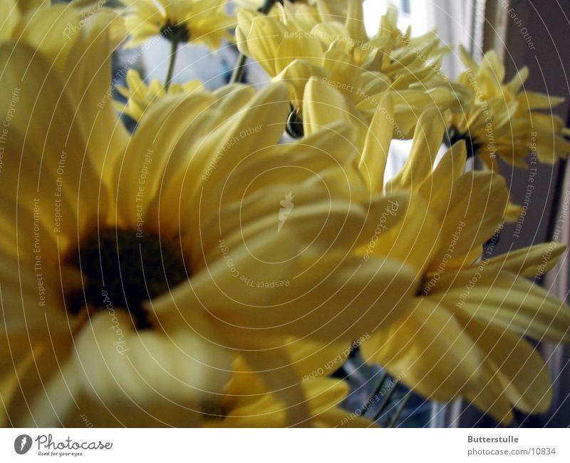 Blumenmeer gelb Blüte