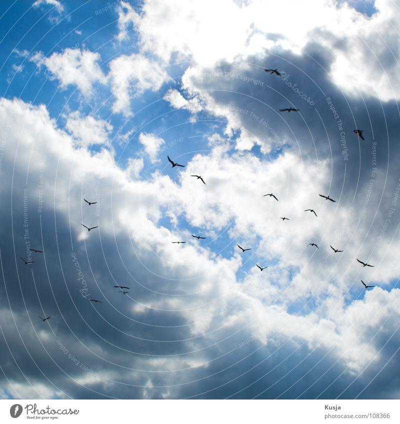 Möweninvasion Himmel weiß blau schwarz Wolken Vogel fliegen schreien kreisen flattern