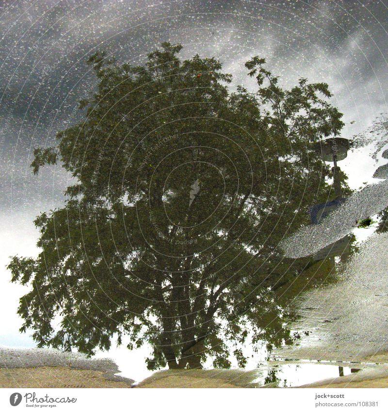 Laubbaum in der Pfütze Gewitterwolken Klimawandel schlechtes Wetter Marzahn einfach natürlich unten grau Inspiration Surrealismus Teer Hintergrundbild