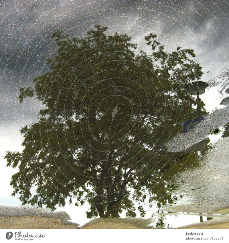 Muab Wasser Himmel Gewitterwolken Klimawandel schlechtes Wetter Baum Marzahn Pfütze einfach natürlich unten grau grün Stimmung Verschwiegenheit Hoffnung