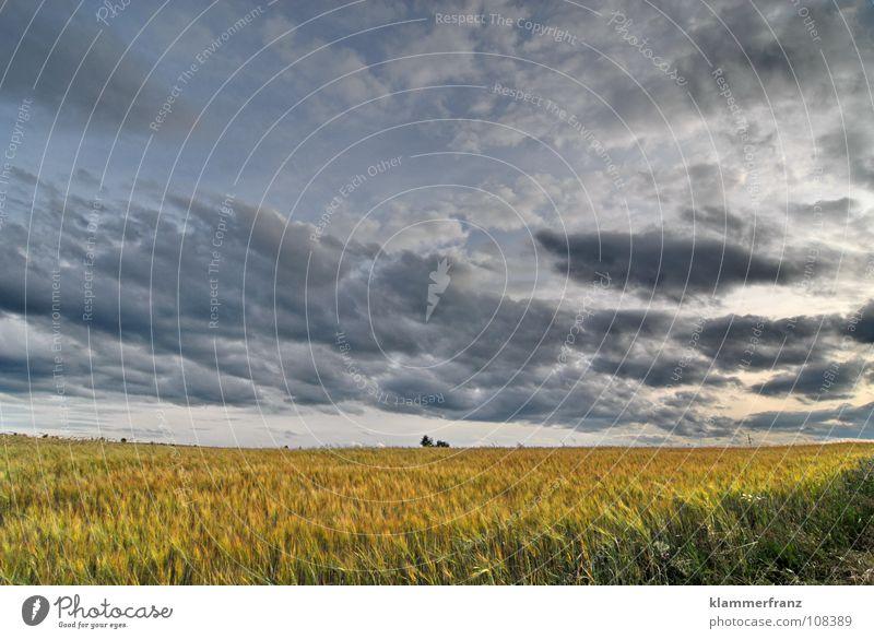 Endlose Weite Feld Hoffnung Gras Horizont Wolken dunkel Der Herr der Ringe Auenland Himmel schlechtes Wetter Baum gehen unterwegs Zielerreichung Hafer Futter