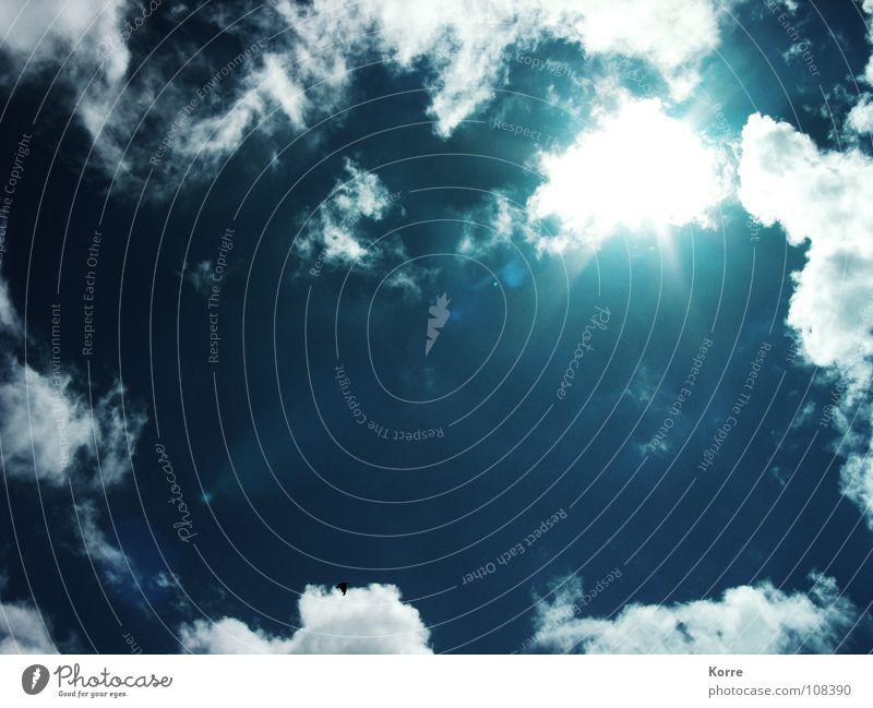 Evanescent Summer Thoughts Farbfoto Außenaufnahme Tag Licht Lichterscheinung Sonnenlicht Sonnenstrahlen Gegenlicht Froschperspektive schön Freiheit Sommer Luft