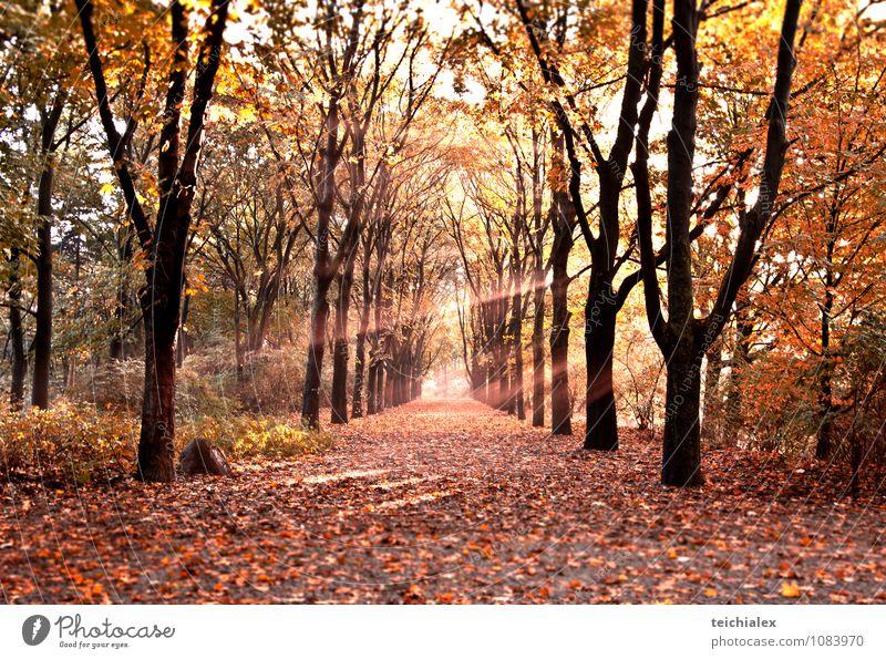 Herbstweg Natur Sonnenaufgang Sonnenuntergang Schönes Wetter Baum Sträucher Park Wald Glück Zufriedenheit Lebensfreude Warmherzigkeit Erholung Farbe Idylle