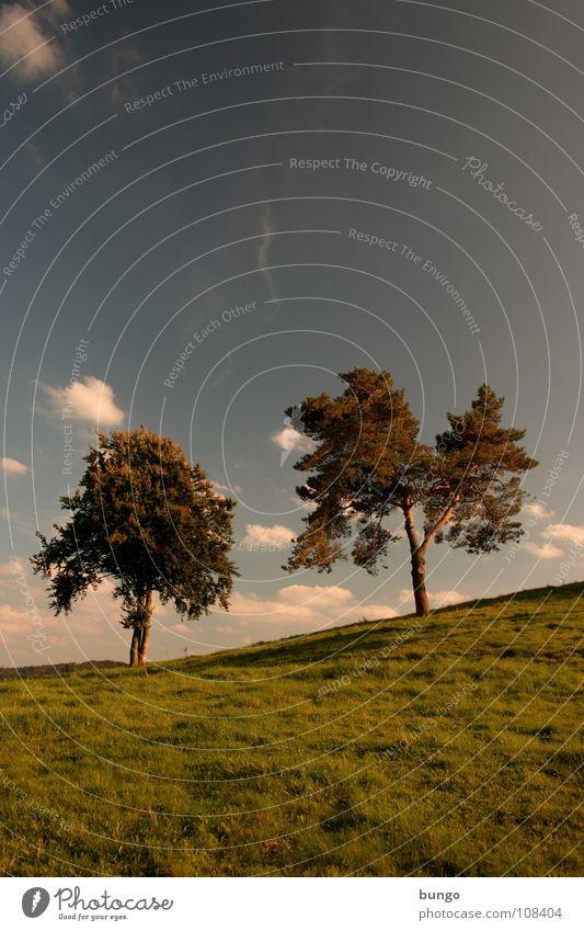 Hoffen Natur Himmel Baum ruhig Wolken Einsamkeit Leben dunkel Erholung Herbst träumen Landschaft 2 Zusammensein orange Horizont