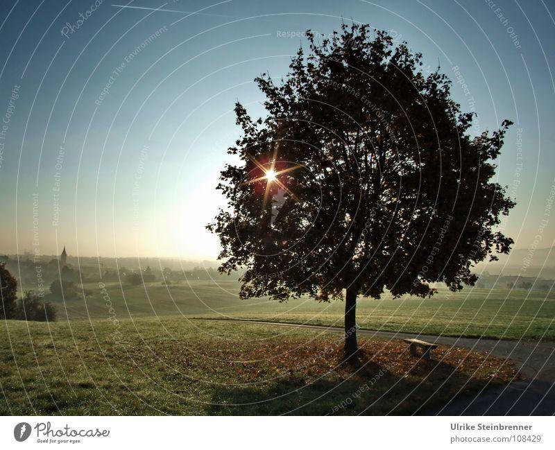 Morgenstern Natur Pflanze schön Baum Landschaft Umwelt Herbst Wiese Wege & Pfade Horizont glänzend Feld Energiewirtschaft Nebel leuchten Kraft
