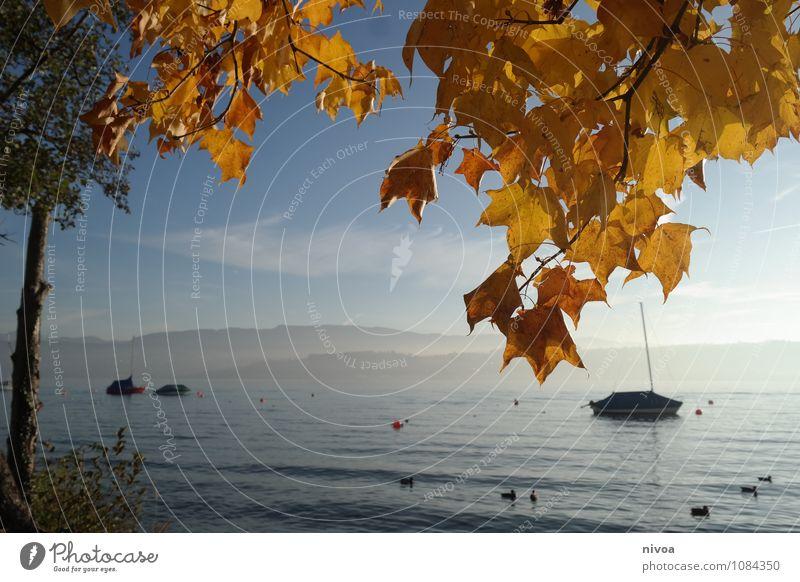 herbstsee Himmel Ferien & Urlaub & Reisen blau Wasser Baum Erholung Landschaft ruhig Wolken Wärme Herbst gehen braun Horizont glänzend träumen