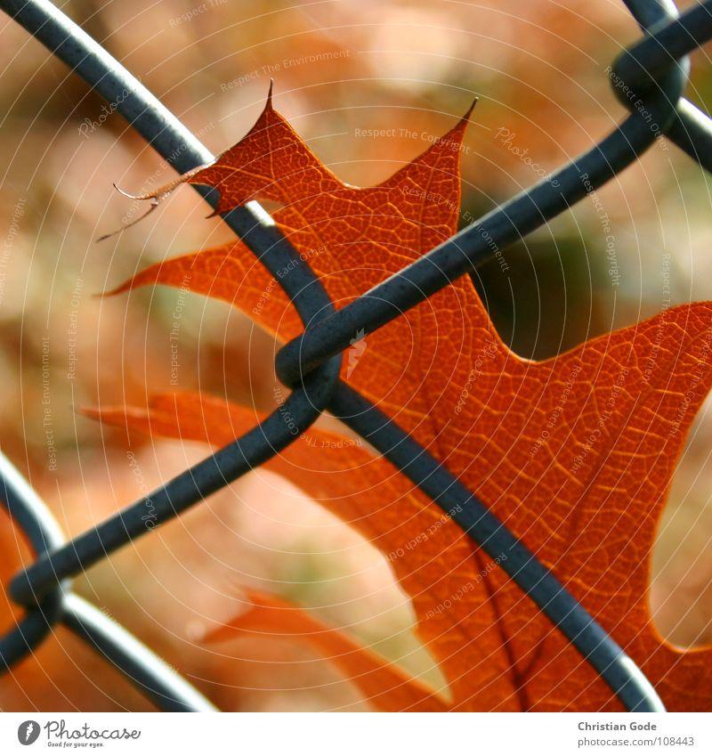 Gefangen Natur grün Baum rot Sommer Blatt Winter Herbst Sand Garten braun Erde Wind fliegen einzeln Ast