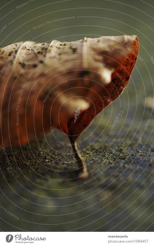 !trash! 2015 | abgehangen Umwelt Natur Landschaft Erde Herbst Wetter Pflanze Blatt alt dünn authentisch einzigartig nah natürlich rund trashig trist trocken