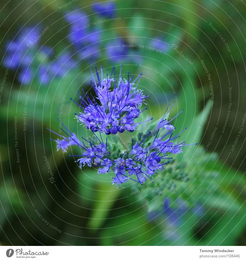 Planète bleue Pflanze Blattgrün Sommer Frühling giftgrün violett Grünpflanze Wachstum Jahreszeiten weich nass frisch Botanik Tiefenschärfe Blume Gras Blüte
