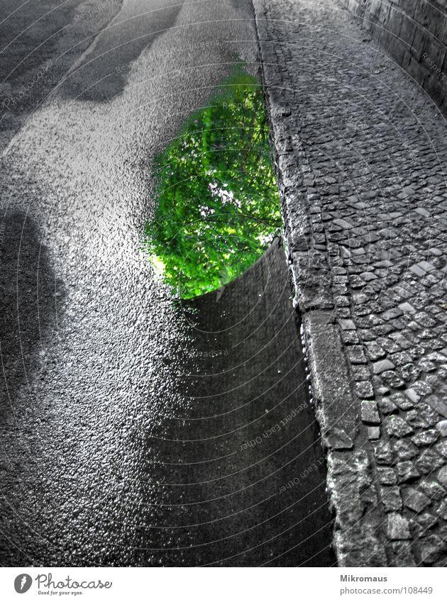 Pfütze nass feucht Reflexion & Spiegelung Baum grün Blatt Straße Tunnel Wege & Pfade Brücke Bürgersteig Stein Kopfsteinpflaster Pflastersteine Teer Straßenbelag