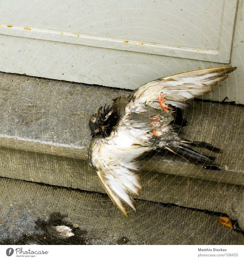 ADDUKTORENZERRUNG Taube Vogel Tier weiß Beerdigung Unfall Absturz abgestürzt Müllabfuhr Hausmüll Fußmatte Stadtleben Knockout ernst Luftverkehr Trauer