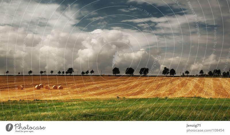 Herbstlandschaft. Wolken Feld Baum Allee Landstraße Landwirtschaft Heuballen Himmel Getreide Ackerbau Amerika Landschaft Ernte Straße Wetter