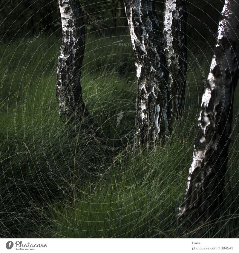 natürlich | Wasserstandsmelderinnen Natur Pflanze schön Baum Landschaft Ferne kalt Umwelt feminin Gras Zeit Zusammensein Kraft stehen Erfolg