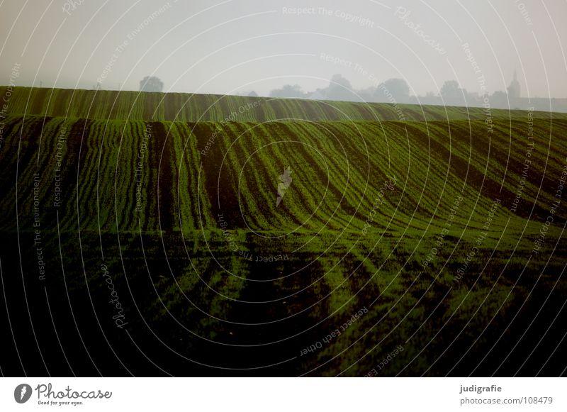 Acker Feld grün Aussaat Hügel Wellen Landwirtschaft braun Nebel Farbe Herbst Ernte Linie Erde Bodenbelag