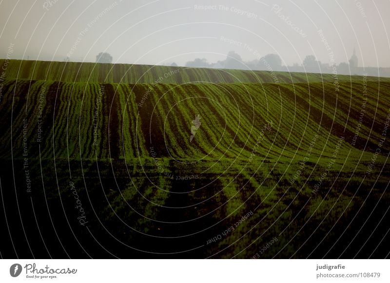 Acker grün Farbe Herbst Linie braun Feld Wellen Nebel Erde Bodenbelag Hügel Landwirtschaft Ernte Aussaat