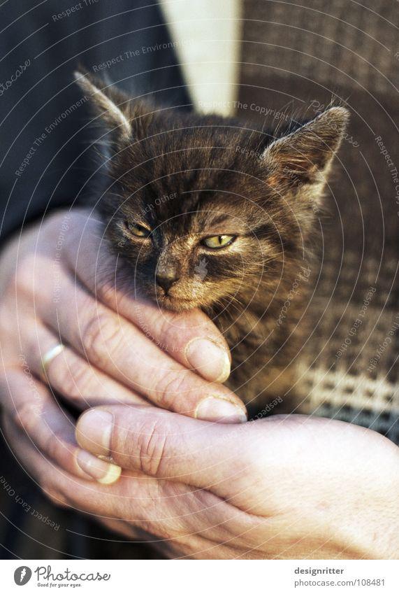Nermal Katze Hand Liebe klein Stil gefährlich Sicherheit bedrohlich niedlich Schutz Säugetier Geborgenheit klug Zuneigung clever listig