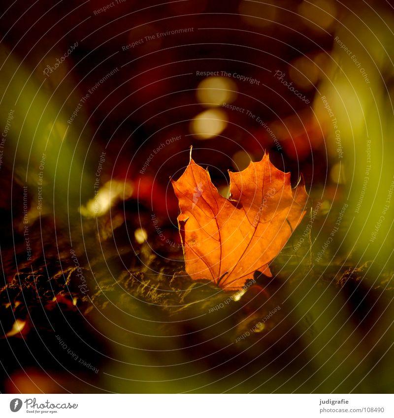 Sonntag Blatt Herbst Feld Gras Licht schön Physik Umwelt Herz-/Kreislauf-System Farbe Sonne orange Wärme Lampe Natur