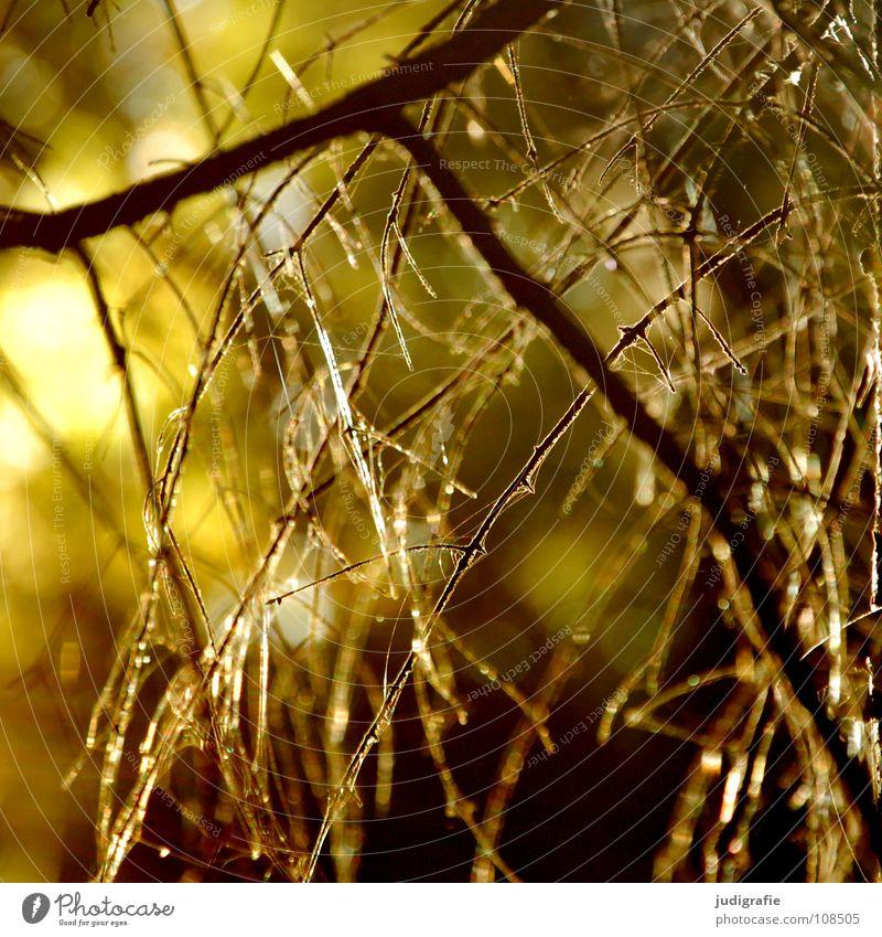 Licht Baum zart Friedhof gelb schön Erkenntnis Herbst Umwelt unheimlich Märchen Farbe Zweig Ast gehrden gold Lampe Natur