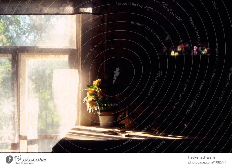 Spieglein, Spieglein schön alt weiß Sonne Blume rot Sommer gelb dunkel Fenster Blüte Traurigkeit Wärme Zufriedenheit Graffiti warten