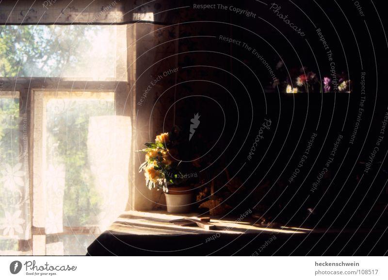 Spieglein, Spieglein Topf schön Zufriedenheit Sommer Sonne Tisch Spiegel Wärme Blume Blüte Fenster Graffiti alt Traurigkeit warten dunkel klein gelb violett rot