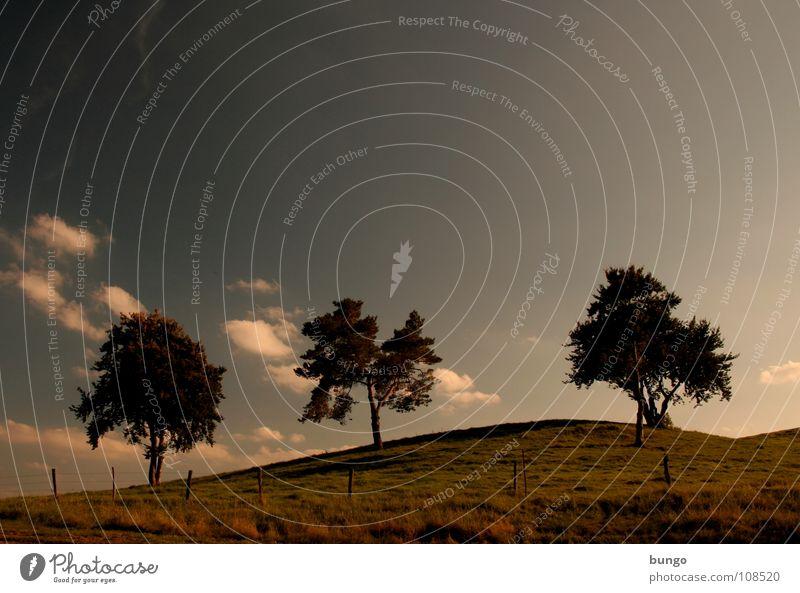 Sinne verwenden Baum Wolken schlechtes Wetter dunkel bedrohlich Dämmerung Nacht Horizont Sonnenuntergang träumen Traumwelt Einsamkeit harmonisch Farbenspiel