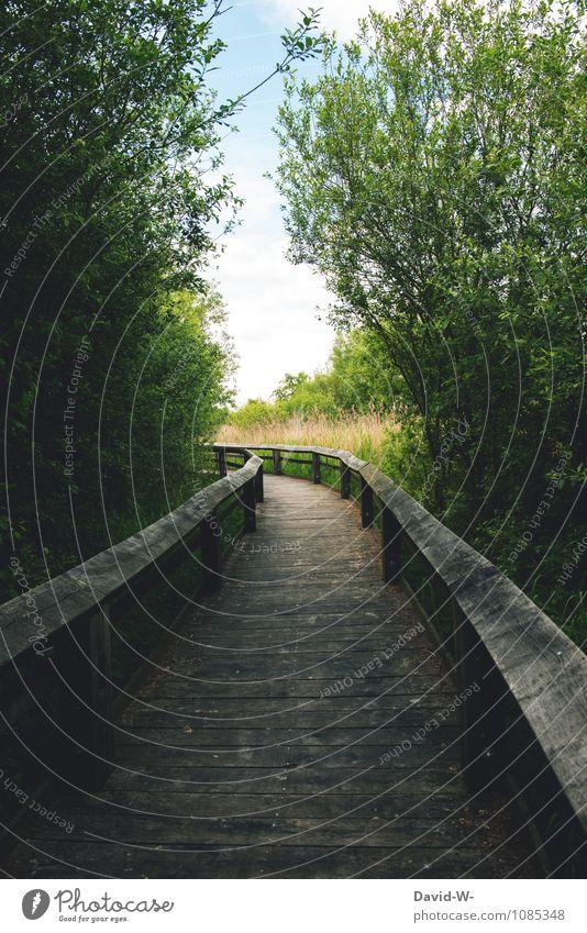 My Way Natur schön Sommer Ferne Umwelt Gefühle Wege & Pfade Freiheit Stimmung Sträucher Beginn Ausflug Warmherzigkeit Schönes Wetter Brücke Abenteuer