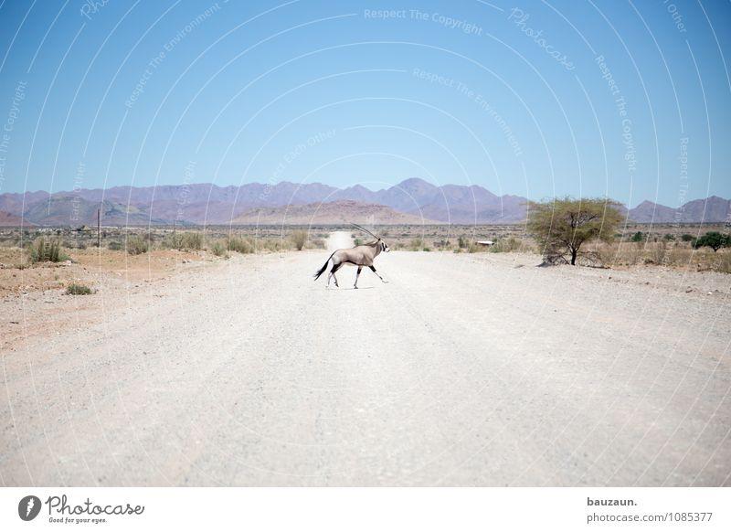 oryx. Himmel Natur Ferien & Urlaub & Reisen Sommer Baum Landschaft Tier Ferne Berge u. Gebirge Straße Wege & Pfade Freiheit Wildtier Tourismus Verkehr laufen