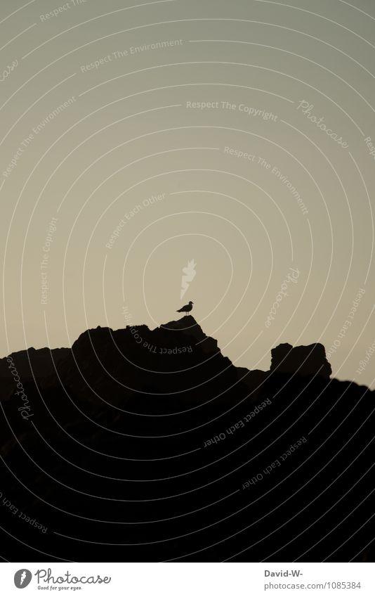 Der Wächter Natur Ferien & Urlaub & Reisen Sommer Erholung Meer ruhig Ferne dunkel Umwelt Berge u. Gebirge Küste Freiheit Vogel Felsen Tourismus Ausflug