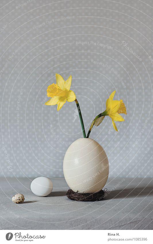 es ostert III gelb hell Lifestyle Blühend Ostern Ei Stillleben Tischwäsche Vase Frühlingsgefühle Narzissen Größenvergleich