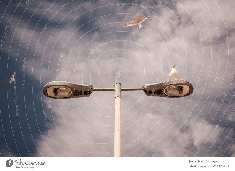Brighton III Himmel Ferien & Urlaub & Reisen Sommer Meer Tier Küste fliegen Lampe Textfreiraum sitzen Straßenbeleuchtung Möwe Sommerurlaub England wählen