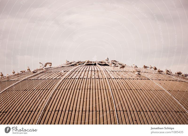 Brighton I Himmel (Jenseits) Meer Tier Küste Vogel ästhetisch Tiergruppe Dach viele Mitte Möwe Sommerurlaub Jahrmarkt Anlegestelle Anhäufung England