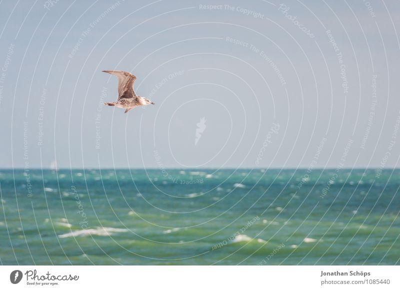 Brighton V Himmel (Jenseits) schön Wasser Meer Tier Strand Bewegung Küste Freiheit fliegen Zufriedenheit elegant ästhetisch Feder Flügel Wolkenloser Himmel