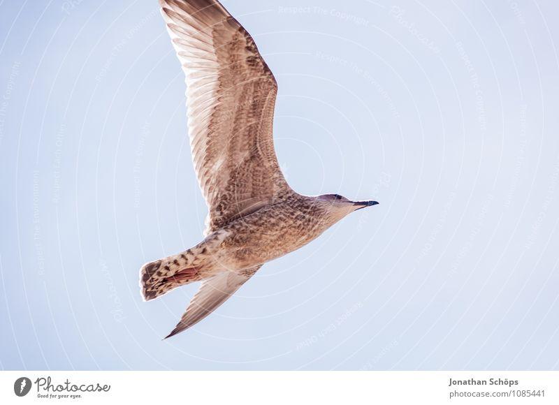 Brighton IV Tier 1 ästhetisch Zufriedenheit Bewegung elegant Energie Optimismus Ferne Möwe Möwenvögel fliegend Freiheit Luftverkehr aufsteigen Meer Küste