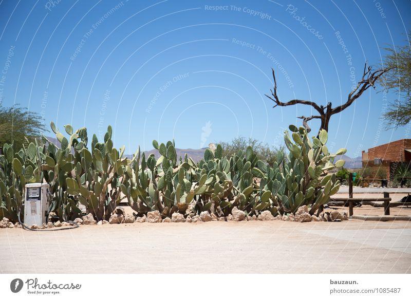 tanken. Ferien & Urlaub & Reisen Tourismus Abenteuer Umwelt Natur Landschaft Himmel Wolkenloser Himmel Sonne Sommer Schönes Wetter Baum Kaktus Wüste Namibia