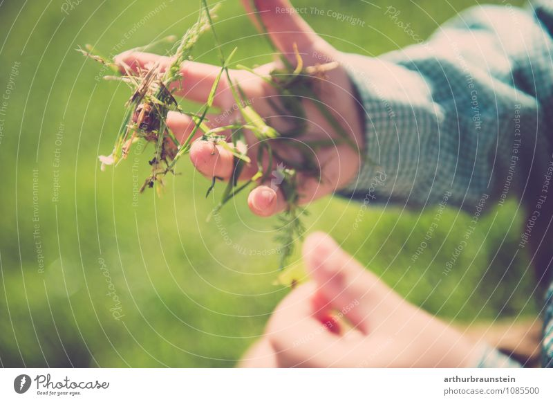 Frisches Gras in der Hand Mensch Kind Natur grün Umwelt Gras Junge Spielen Glück Freiheit Garten maskulin Freizeit & Hobby frisch authentisch Kindheit
