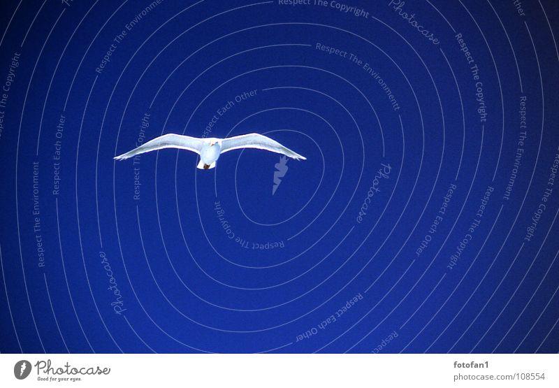 Moewe müsste man sein... blau Ferne Vogel fliegen Luftverkehr Möwe Blauer Himmel