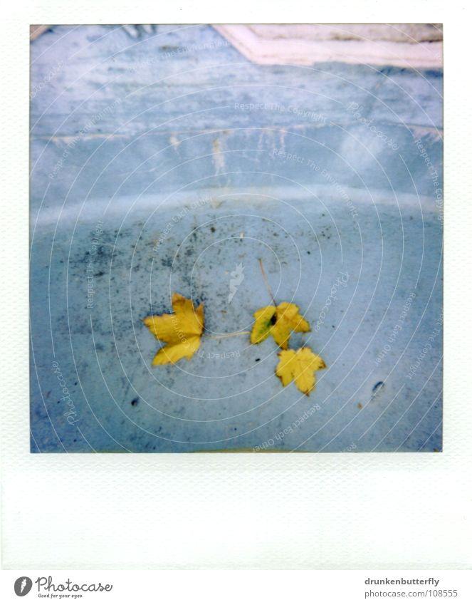 herbst I Baum blau Blatt gelb Herbst Stein Schwimmbad Bodenbelag fallen Jahreszeiten trocken Stillleben Becken Oktober