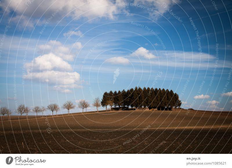 toskanische Idylle Himmel Natur Ferien & Urlaub & Reisen blau Pflanze Landschaft Wolken Wald Umwelt Frühling braun Horizont Feld Wachstum Erde Tourismus