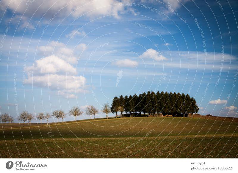 Wachstum Ferien & Urlaub & Reisen Tourismus Ausflug Landwirtschaft Forstwirtschaft Natur Landschaft Pflanze Himmel Wolken Horizont Sonnenlicht Frühling Klima