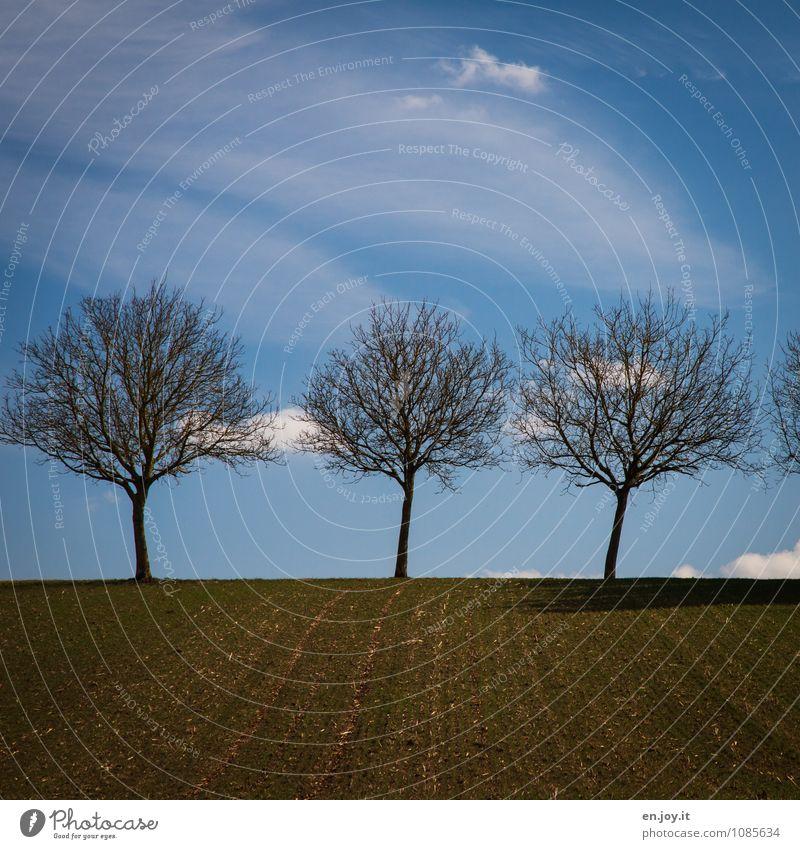 3 Landwirtschaft Forstwirtschaft Umwelt Natur Landschaft Pflanze Erde Himmel Wolken Horizont Frühling Klima Schönes Wetter Baum Feld Wachstum blau braun